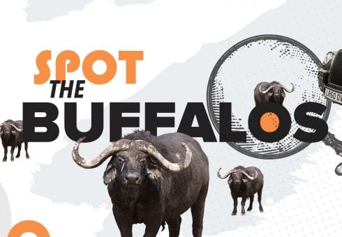 Buffalo 7 hides 7 buffalos. Can you spot them?